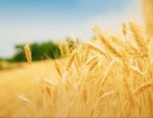 Benessere e Nutrizione dell'Umanità